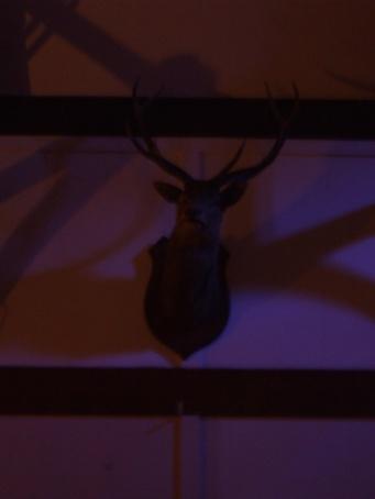 deer-head_2422267108_o
